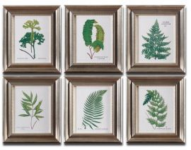 33592 Ferns Framed Art Set/6