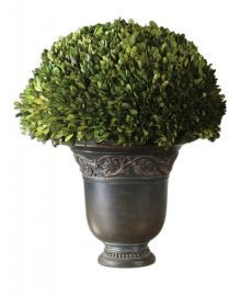 60092 Globe Preserved Boxwood