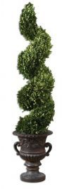 60094 Spiral Topiary Preserved Boxwood