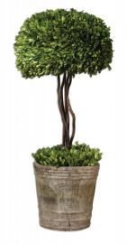 60095 Tree Topiary Preserved Boxwood