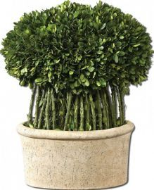 60108 Willow Topiary Preserved Boxwood